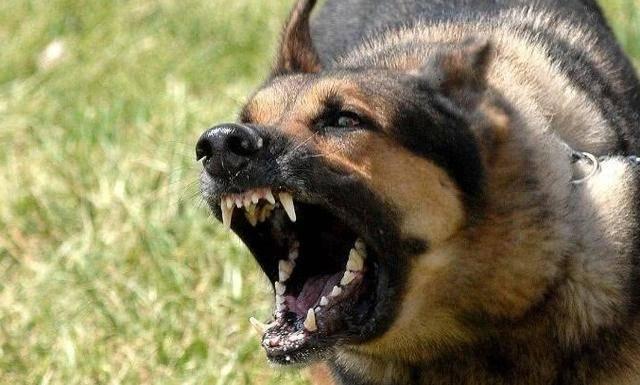 怕狗咬人?狗儿畏超声波驱狗器教你这样做
