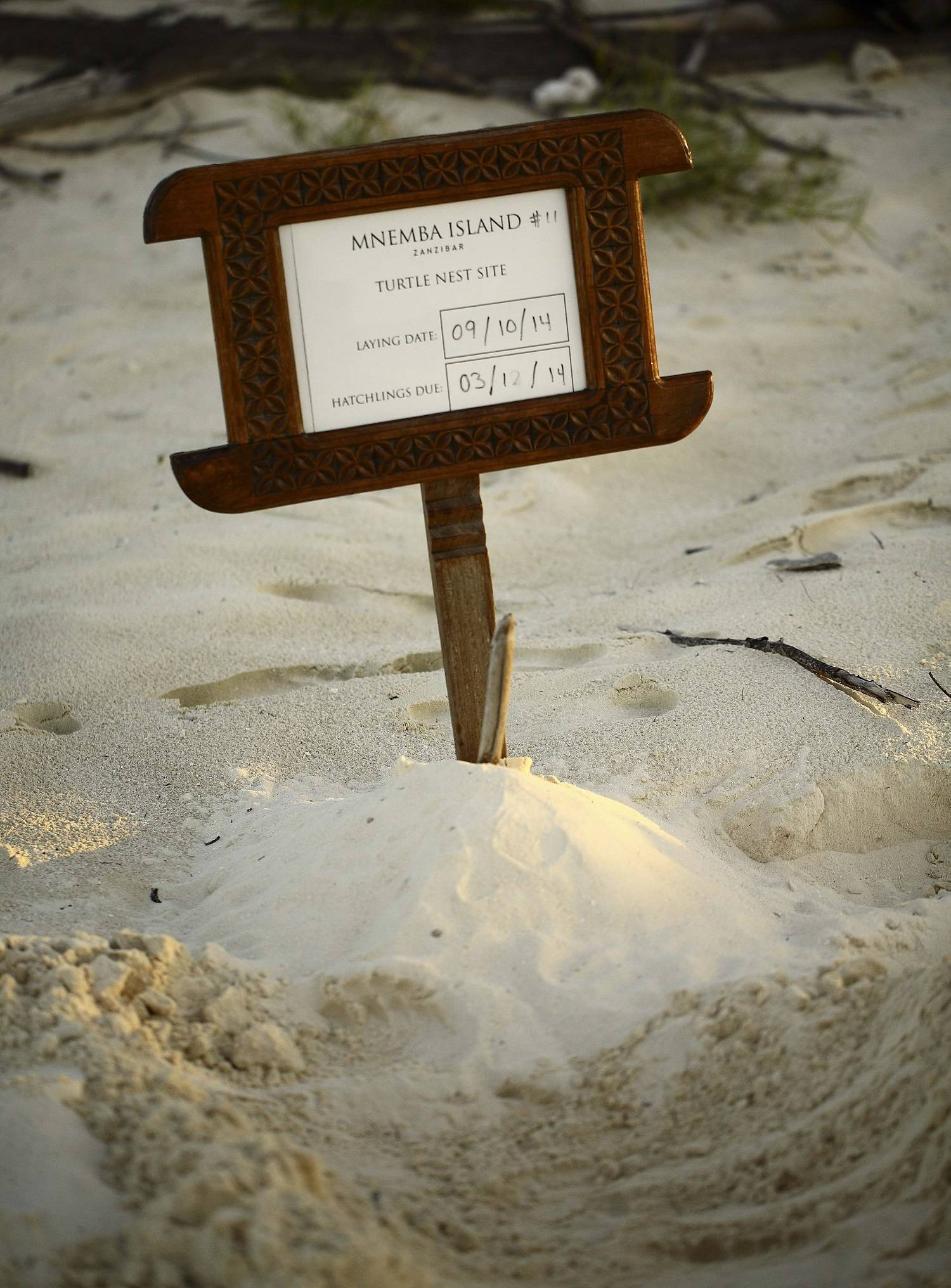 andBeyond Mnemba turtle nest.jpg