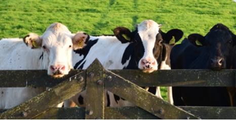 Oz Farm澳滋儿童奶粉