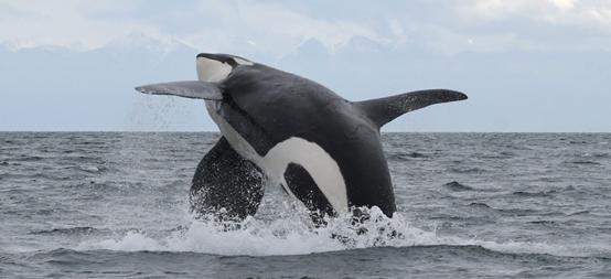 Nest Designs 携手 David Suzuki 基金会保护海洋精灵